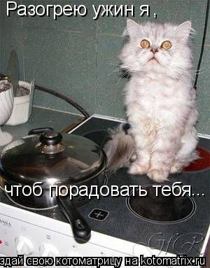 Котоматрица: Разогрею ужин я , чтоб порадовать тебя ...