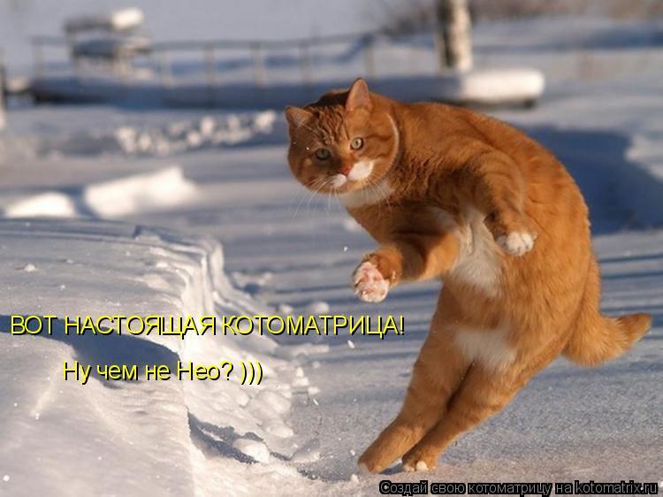 Котоматрица: ВОТ НАСТОЯЩАЯ КОТОМАТРИЦА! Ну чем не Нео? )))