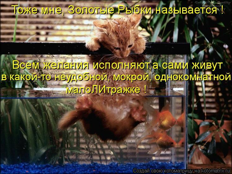 Котоматрица: Тоже мне, Золотые Рыбки называется ! Всем желания исполняют,а сами живут в какой-то неудобной, мокрой, однокомнатной малоЛИтражке !