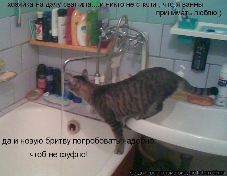 Котоматрица: хозяйка на дачу свалила....и никто не спалит, что я ванны  принимать люблю:) да и новую бритву попробовать надобно ...чтоб не фуфло!