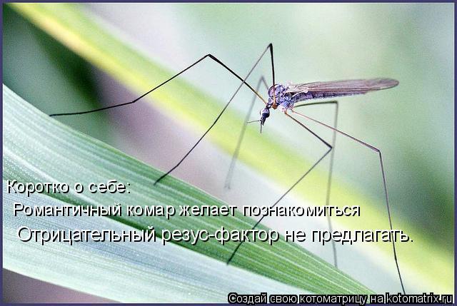 Котоматрица: Коротко о себе:  Романтичный комар желает познакомиться Отрицательный резус-фактор не предлагать.