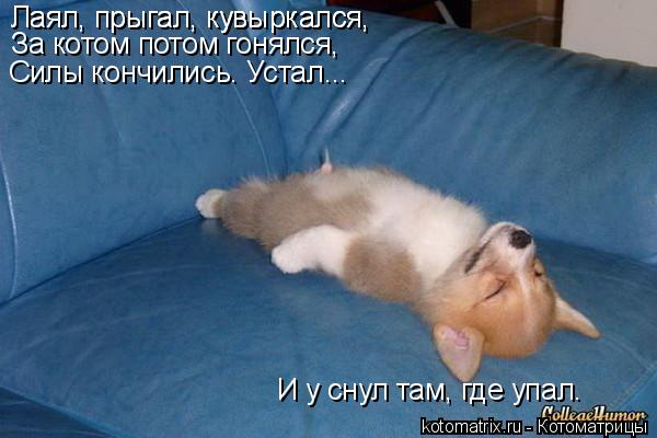 Котоматрица: Лаял, прыгал, кувыркался, Лаял, прыгал, кувыркался, За котом потом гонялся, Силы кончились. Устал... И у снул там, где упал.