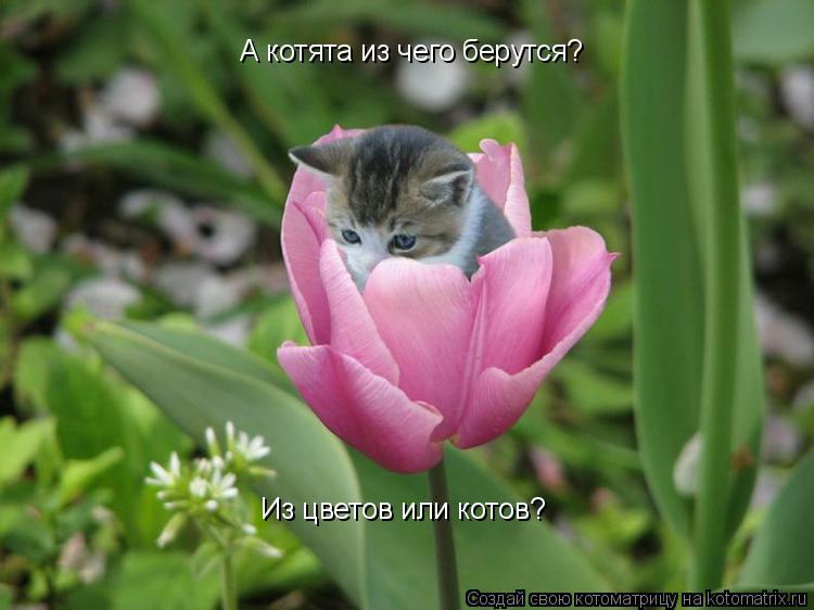 Котоматрица: А котята из чего берутся? Из цветов или котов?