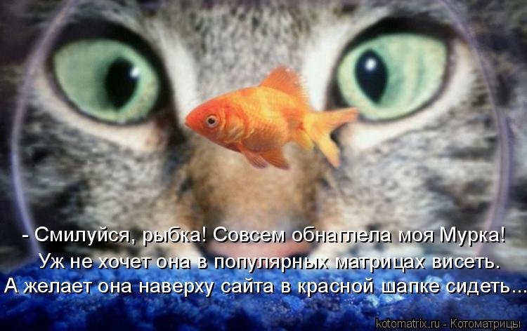 Котоматрица: - Смилуйся, рыбка! Совсем обнаглела моя Мурка! Уж не хочет она в популярных матрицах висеть. А желает она наверху сайта в красной шапке сидет