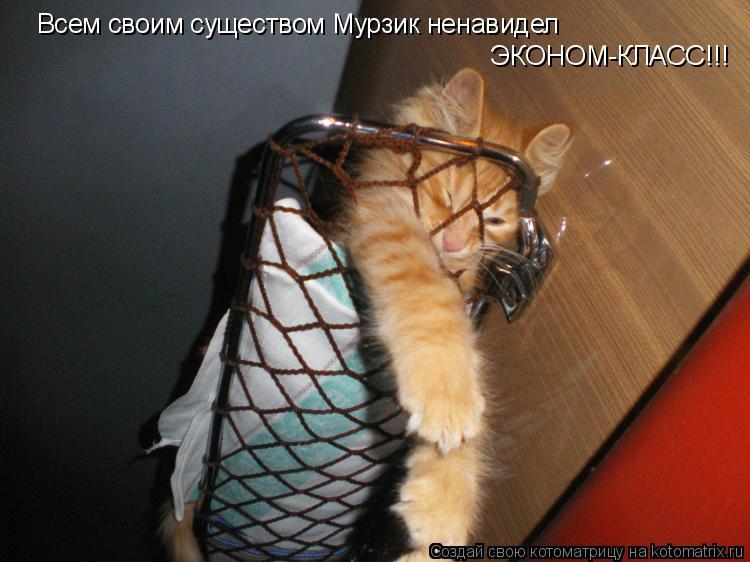 Котоматрица: Всем своим существом Мурзик ненавидел ЭКОНОМ-КЛАСС!!!