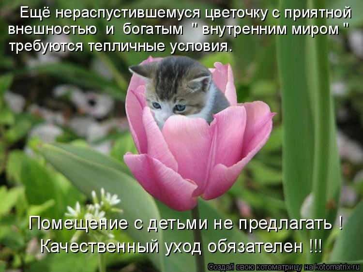"""Котоматрица: Помещение с детьми не предлагать ! Качественный уход обязателен !!! Ещё нераспустившемуся цветочку с приятной внешностью  и  богатым  """" внутр"""