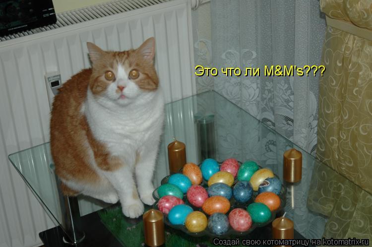 Котоматрица: Это что ли M&M's???