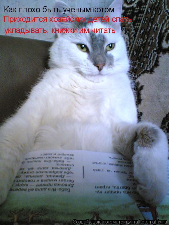 Котоматрица: Как плохо быть ученым котом укладывать, книжки им читать Приходится хозяйских детей спать