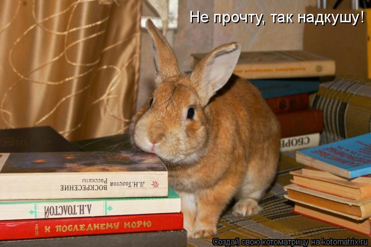 Котоматрица: Не прочту, так надкушу!