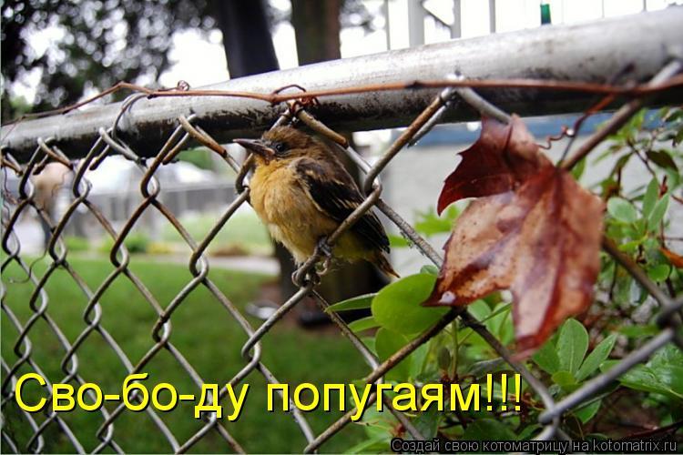Котоматрица: Сво-бо-ду попугаям!!!