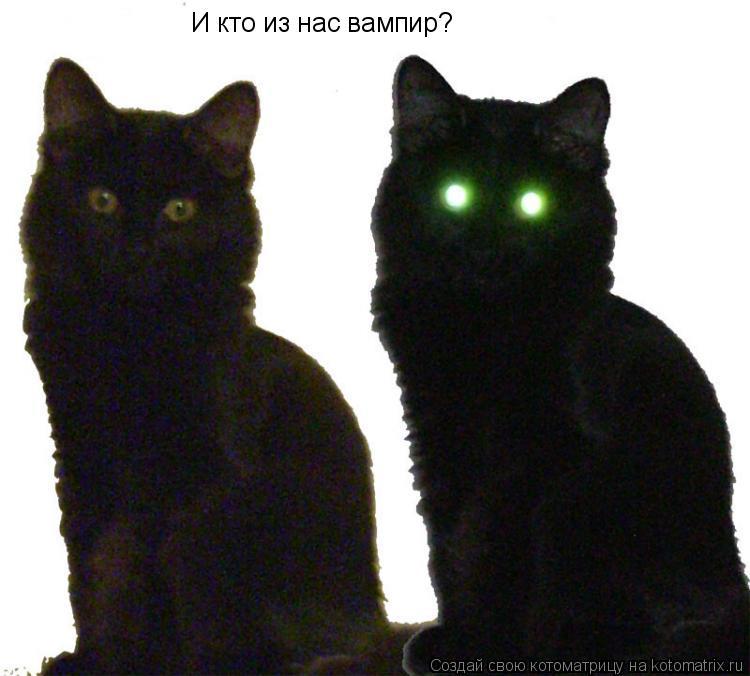 Котоматрица: И кто из нас вампир?