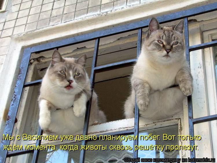 Котоматрица: Мы с Василием уже давно планируем побег. Вот только  ждём момента, когда животы сквозь решётку пролезут.