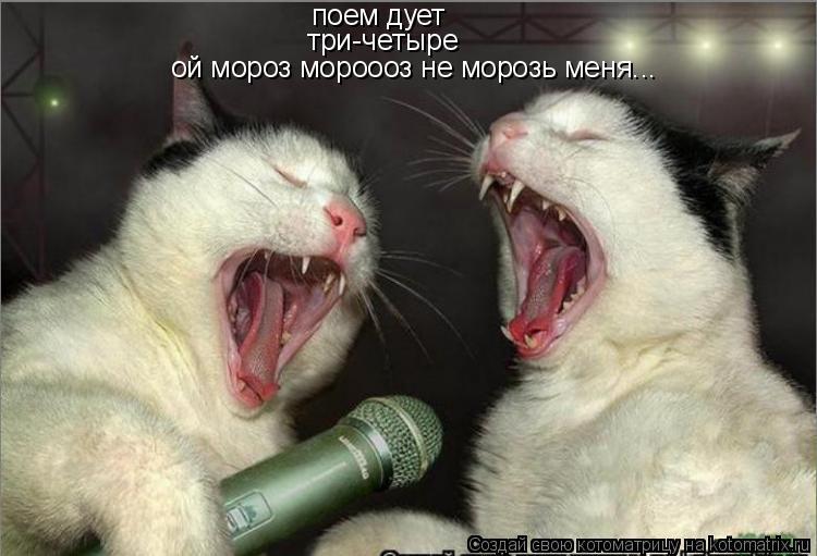 Котоматрица: поем дует три-четыре ой мороз мороооз не морозь меня...