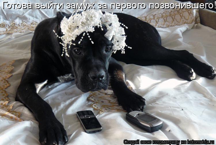 Котоматрица: Готова выйти замуж за первого позвонившего!