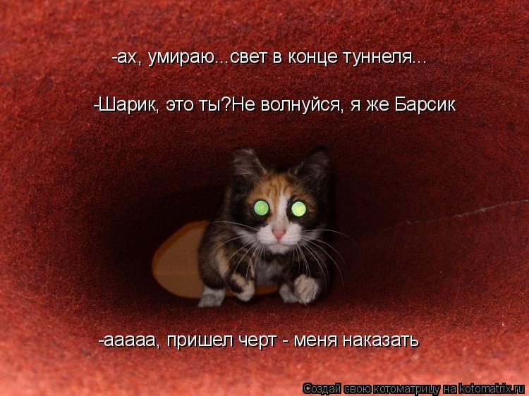 Котоматрица: -ах, умираю...свет в конце туннеля... -Шарик, это ты?Не волнуйся, я же Барсик -ааааа, пришел черт - меня наказать