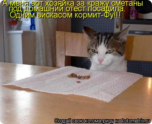 Котоматрица: А меня вот хозяйка за кражу сметаны под домашний отест посадила. Одним вискасом кормит-Фу!!!
