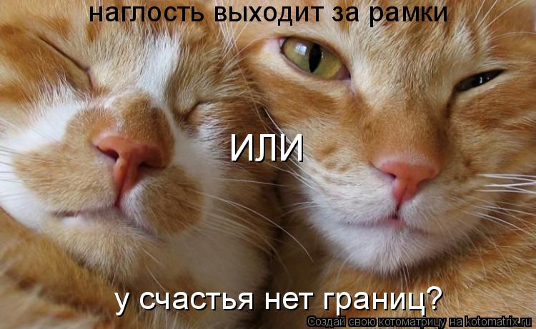 Кошки для Юли.