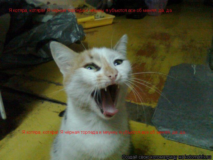 Котоматрица: Я котяра, котяра! Я чёрная торпеда и мяукну я убъются все об меняя, да, да... Я котяра, котяра! Я чёрная торпеда и мяукну я убъются все об меняя,