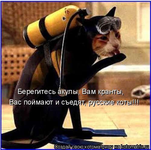 Котоматрица: Берегитесь акулы, Вам кранты, Вас поймают и съедят, русские коты!!!