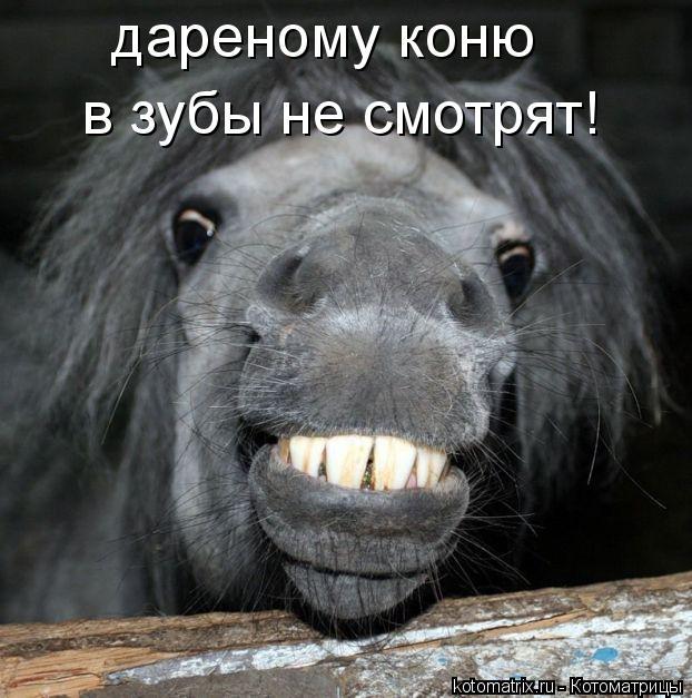 Котоматрица: дареному коню в зубы не смотрят!