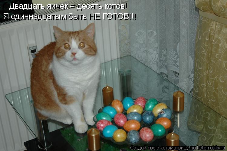 Котоматрица: Двадцать яичек = десять котов! Я одиннадцатым быть НЕ ГОТОВ!!!