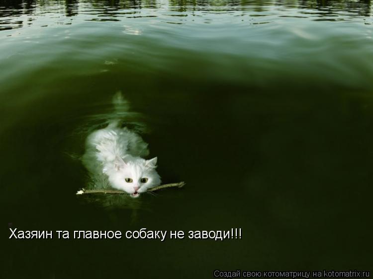 Котоматрица: Хазяин та главное собаку не заводи!!!