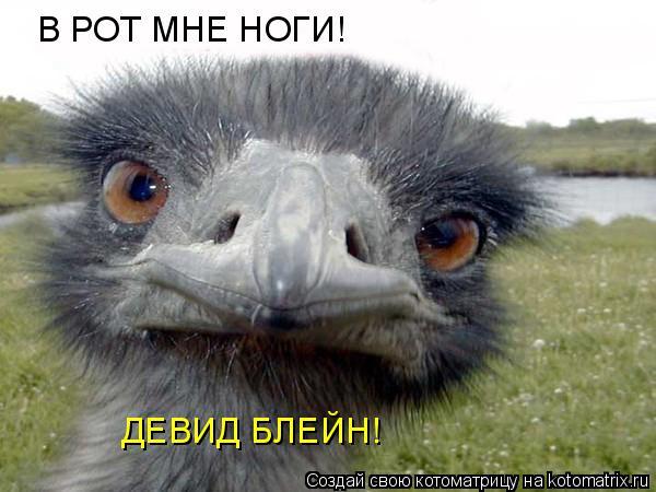 Котоматрица: В РОТ МНЕ НОГИ! ДЕВИД БЛЕЙН!