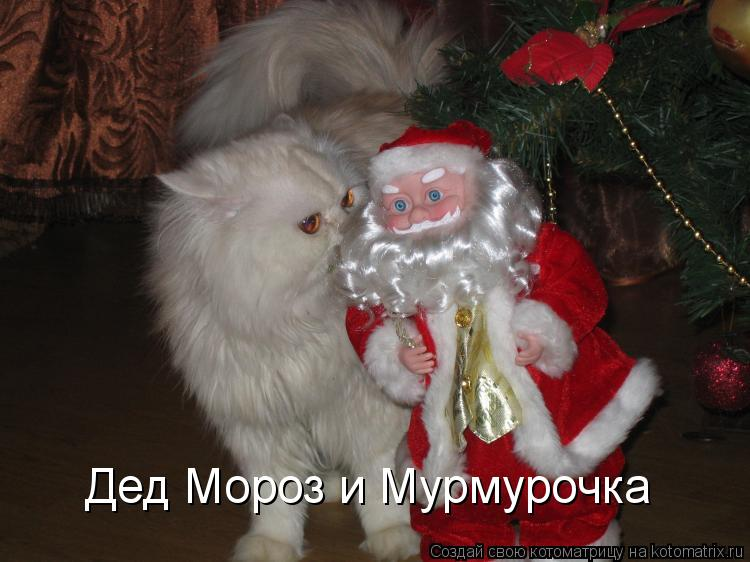 Котоматрица: Дед Мороз и Мурмурочка