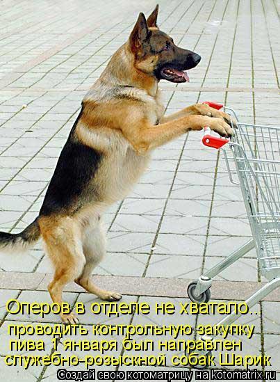 Котоматрица: служебно-розыскной собак Шарик пива 1 января был направлен проводить контрольную закупку Оперов в отделе не хватало...