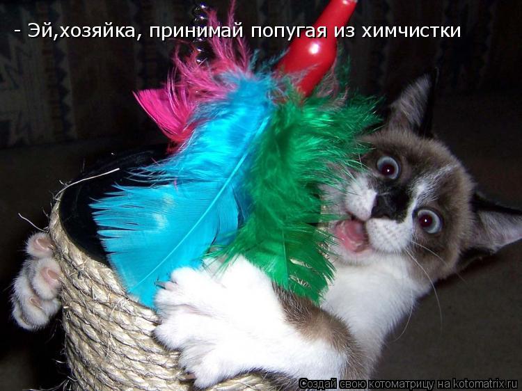 Котоматрица: - Эй,хозяйка, принимай попугая из химчистки