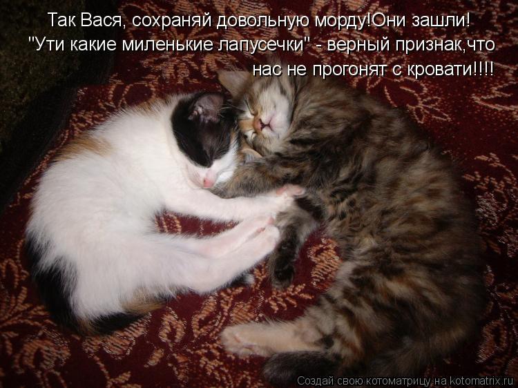 """Котоматрица: Так Вася, сохраняй довольную морду!Они зашли! """"Ути какие миленькие лапусечки"""" - верный признак,что нас не прогонят с кровати!!!!"""