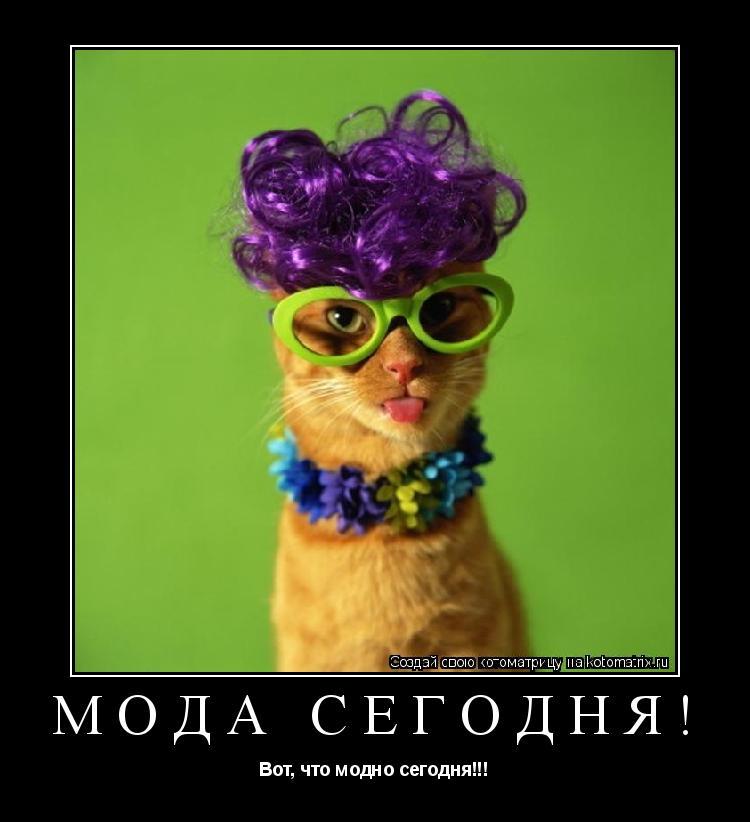 Котоматрица: Мода сегодня! Вот, что модно сегодня!!!