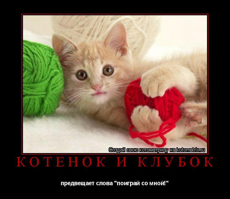 """Котоматрица: котёнок и клубок  предвещает слова """"поиграй со мной!"""""""