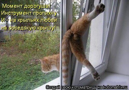 Котоматрица: Момент дорогуша!  Инструмент пропихну И - на крыльях любви на соседскую крышу!