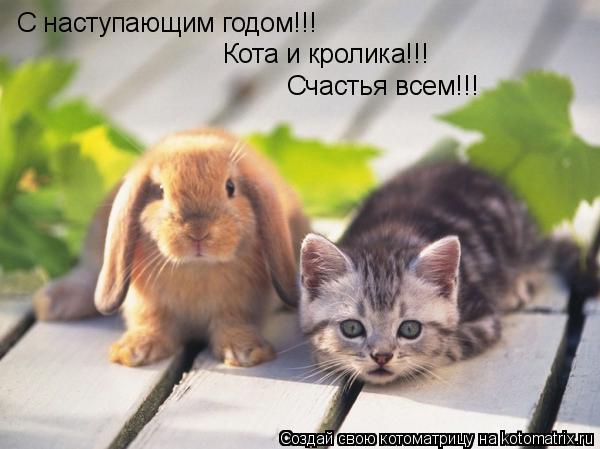 Котоматрица: С наступающим годом!!! Кота и кролика!!! Счастья всем!!!