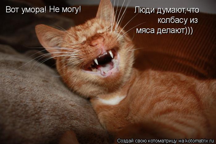 Котоматрица: Вот умора! Не могу! Люди думают,что  колбасу из мяса делают)))