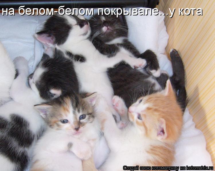 Котоматрица: на белом-белом покрывале...у кота