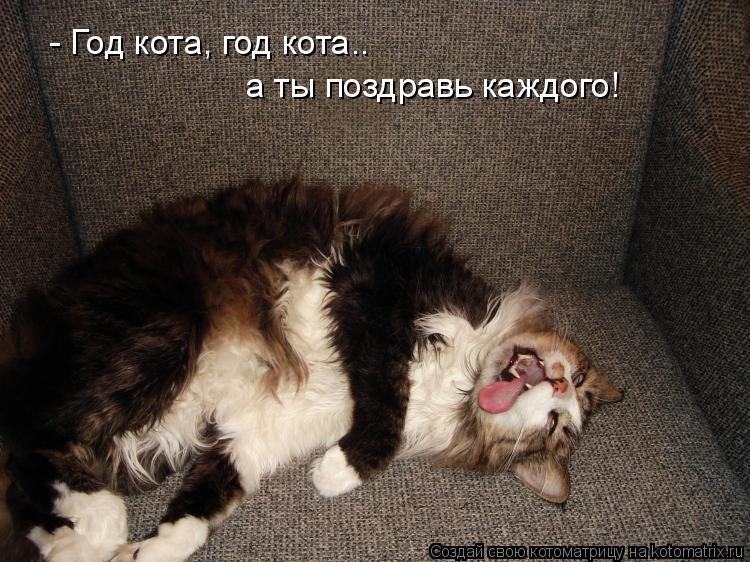 - Год кота, год кота.. а ты поздравь каждого!