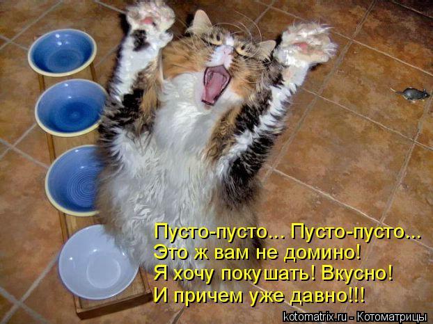 Котоматрица: Пусто-пусто... Пусто-пусто... Это ж вам не домино! Я хочу покушать! Вкусно! И причем уже давно!!!