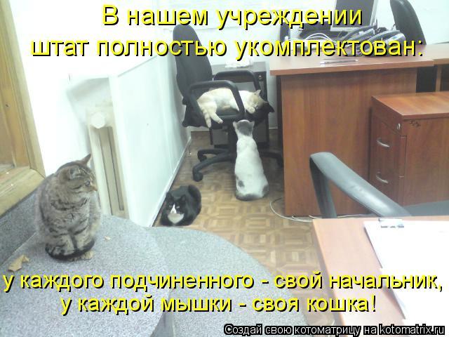 Котоматрица: В нашем учреждении штат полностью укомплектован: у каждой мышки - своя кошка! у каждого подчиненного - свой начальник,