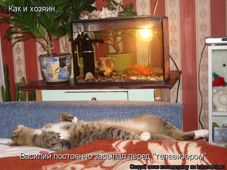 "Котоматрица: Как и хозяин, Василий постоянно засыпал перед ""телевизором"""