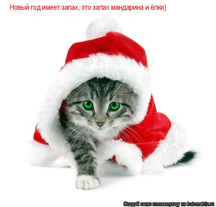 Котоматрица: Новый год имеет запах, это запах мандарина и ёлки)