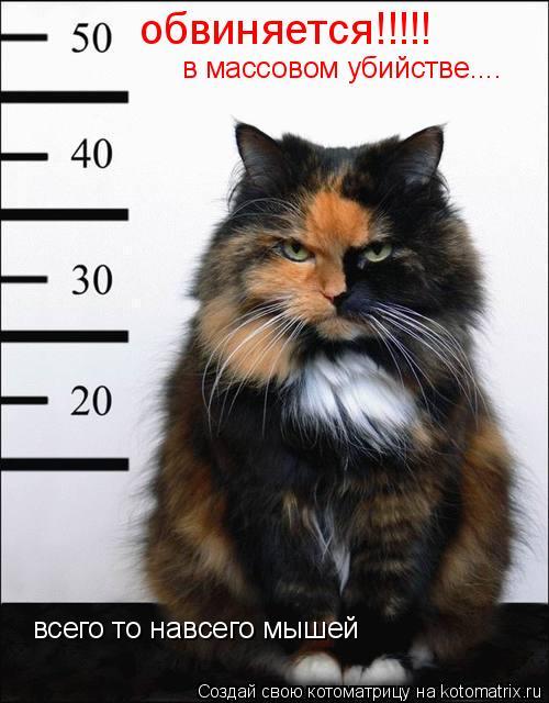 Котоматрица: обвиняется!!!!! в массовом убийстве.... всего то навсего мышей