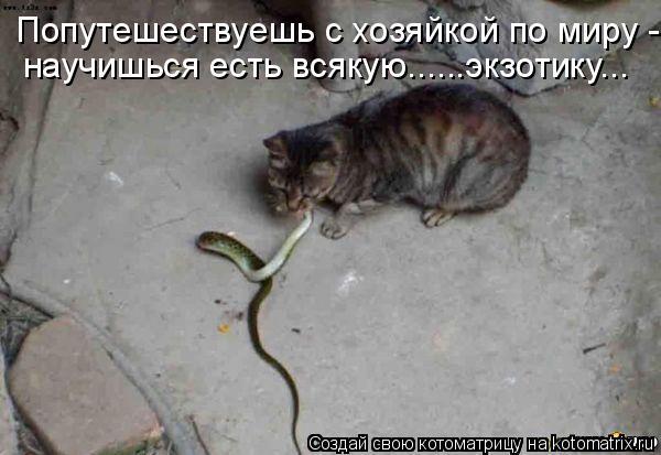 Котоматрица: Попутешествуешь с хозяйкой по миру -  научишься есть всякую......экзотику...