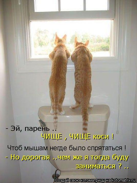 Котоматрица: Чтоб мышам негде было спрятаться !  - Но дорогая ..чем же я тогда буду  - Эй, парень .. ЧИЩЕ , ЧИЩЕ коси ! заниматься ? ..