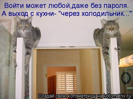 """Котоматрица: Войти может любой,даже без пароля. А выход с кухни- """"через холодильник..."""" А выход с кухни- """"через холодильник..."""""""