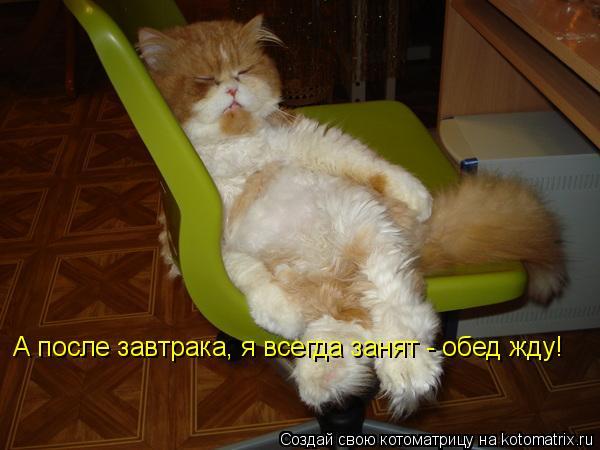 Котоматрица: А после завтрака, я всегда занят - обед жду!