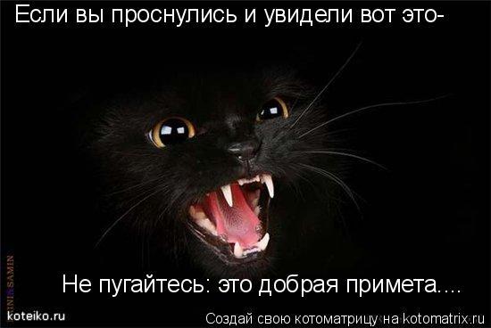 Котоматрица: Если вы проснулись и увидели вот это- Не пугайтесь: это добрая примета....