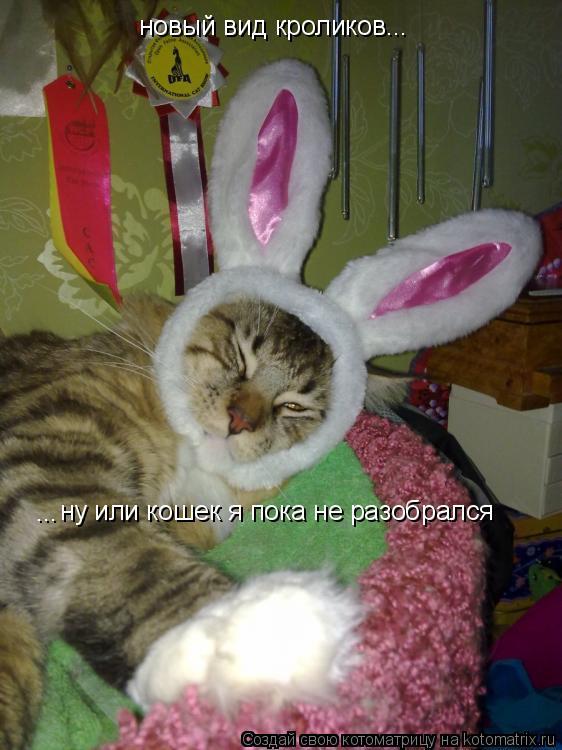 Котоматрица: новый вид кроликов ну или кошек я пока не разобрался ... ...