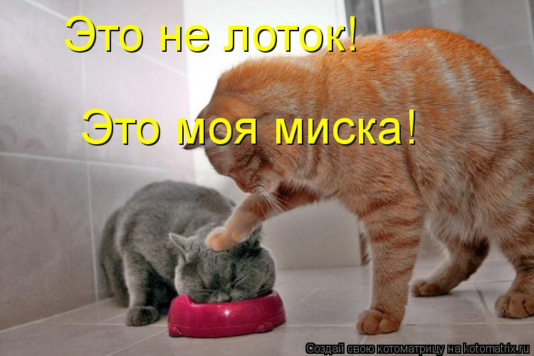 Котоматрица: Это не лоток! Это моя миска!